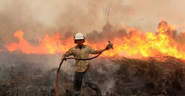 This Indonesian firefighter doesn't appear to have much success trying to fight this forest fire in South Sumatra last Saturday. -- AFP photo by Abdul Qodir