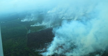 Forest fires are common in Indonesia after the plantations' harvesting season mid-year.