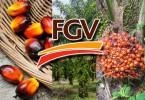 mole-Felda-FGV