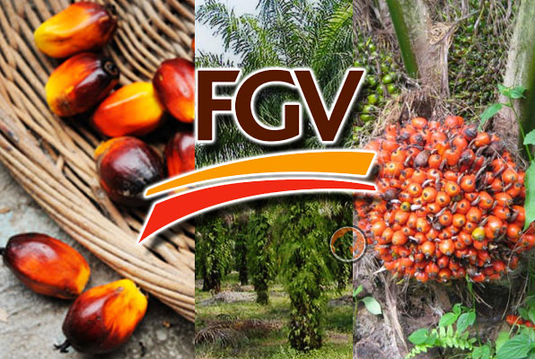 For the second quarter of this year, FGV expects to do better following some cost-cutting measures and good weather that should lead to better production.