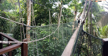 Frim's canopy walkway will be permanently closed on June 30.