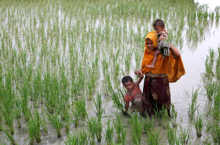 A Rohingya woman and her children walk through a paddy field after crossing the Bangladesh-Myanmar border, in Teknaf, Bangladesh on Sept 6.