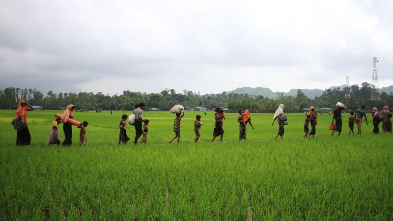The Rohingya leaving their homes and trekking across a paddy field into Bangladesh.