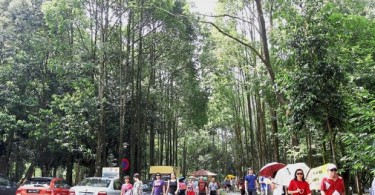 People walking at the Rimba Kiara Park near TTDI, Kuala Lumpur