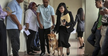 Furby the dog is led to the Magistrate's Court today.
