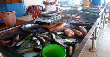 Non-mutant looking fishes sold at a fish market at the Beluk river estuary.