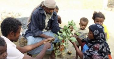 A a man feeds children Halas, a climbing vine of green leaves, in Aslam, Hajjah, Yemen.
