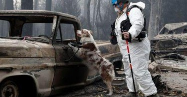 A cadaver dog named IC darted nervously through the charred remnants of a car in Paradise, California, sniffing for victims of the deadliest blaze in the state's history.