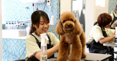 Dog care and grooming is now big business in South Korea, where the pet industry has grown exponentially in recent years.
