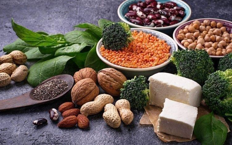 plant protein