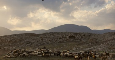 A Palestinian shepherd herds his flock near the Israeli settlement of Argaman, in the Jordan Valley.